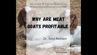 Why Are Meat Goats Profitable