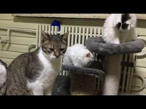 """Приют для кошек """"Хочу Домой"""""""
