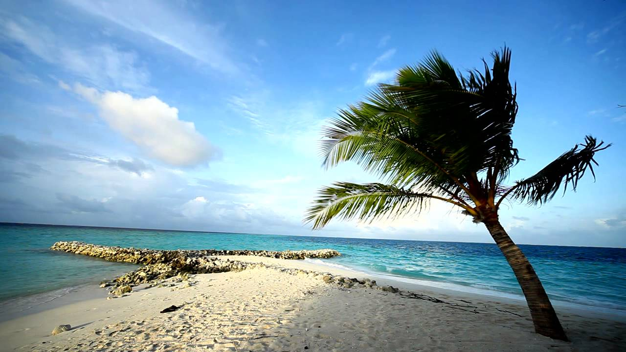 Beach And Sand Palm Tree Swaying In The Breeze