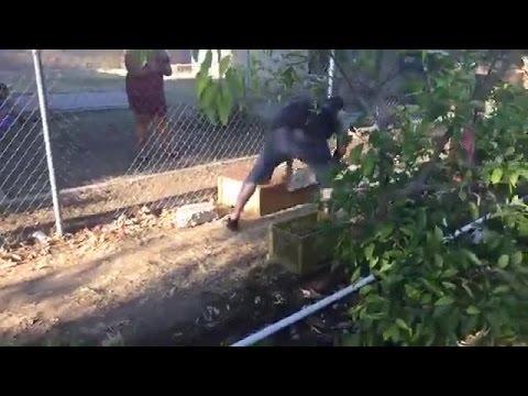 Owner captures tegu running loose in East Bakersfield