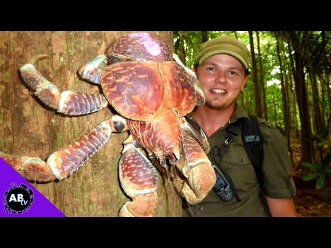 5 Weird Crustaceans You Never Knew Existed! 5 Weird Animal Facts  Ep. 42