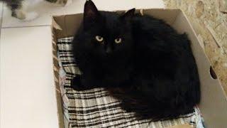 Черный кот приполз к людям просить о помощи