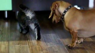 Как собака с кошкой...