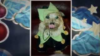 Col. Potter Christmas Tale Of Cairn Terriers -- Please Adopt, Don't Buy! 2012