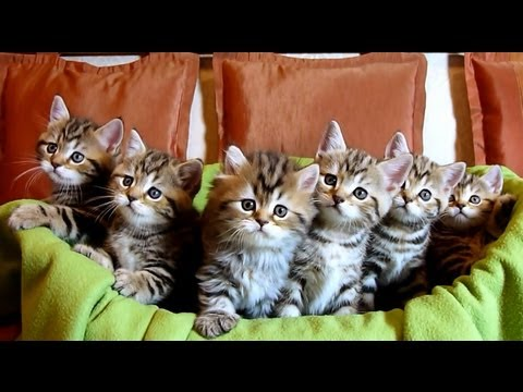 Chorus Line of Cute Kittens : New generation of  Funny Cats