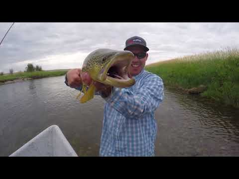 There are some BIG trout out here in Wyoming.....