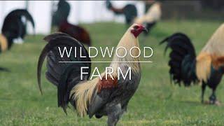 ‼️LA MEJOR GRANJA DE CALIFORNIA WILDWOOD FARM‼️