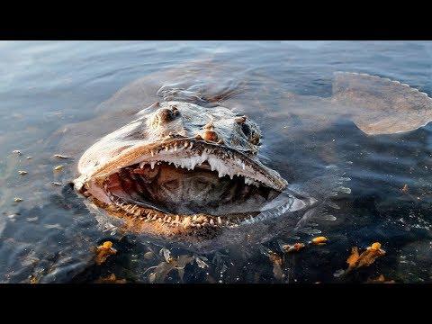 10 gefährlichste Meeresbewohner der Welt!