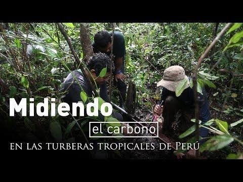 Midiendo el carbono en las turberas tropicales de Perú
