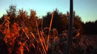Chasse grives 7-11-12 en HD
