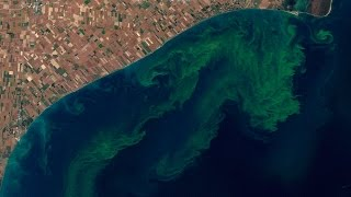 ScienceCasts: The Good, the Bad, and the Algae