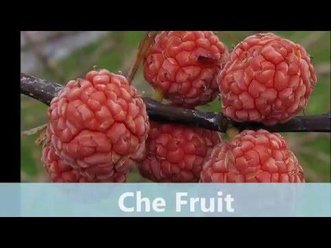 Growing Che Fruit in Seattle