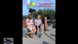 Нереальная дрессировка | летящая собака | Dogs BahMUT