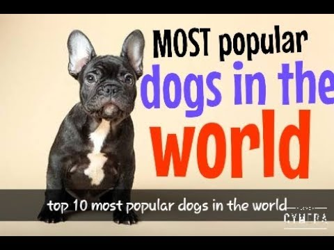 Most popular dogs| most popular dogs in world