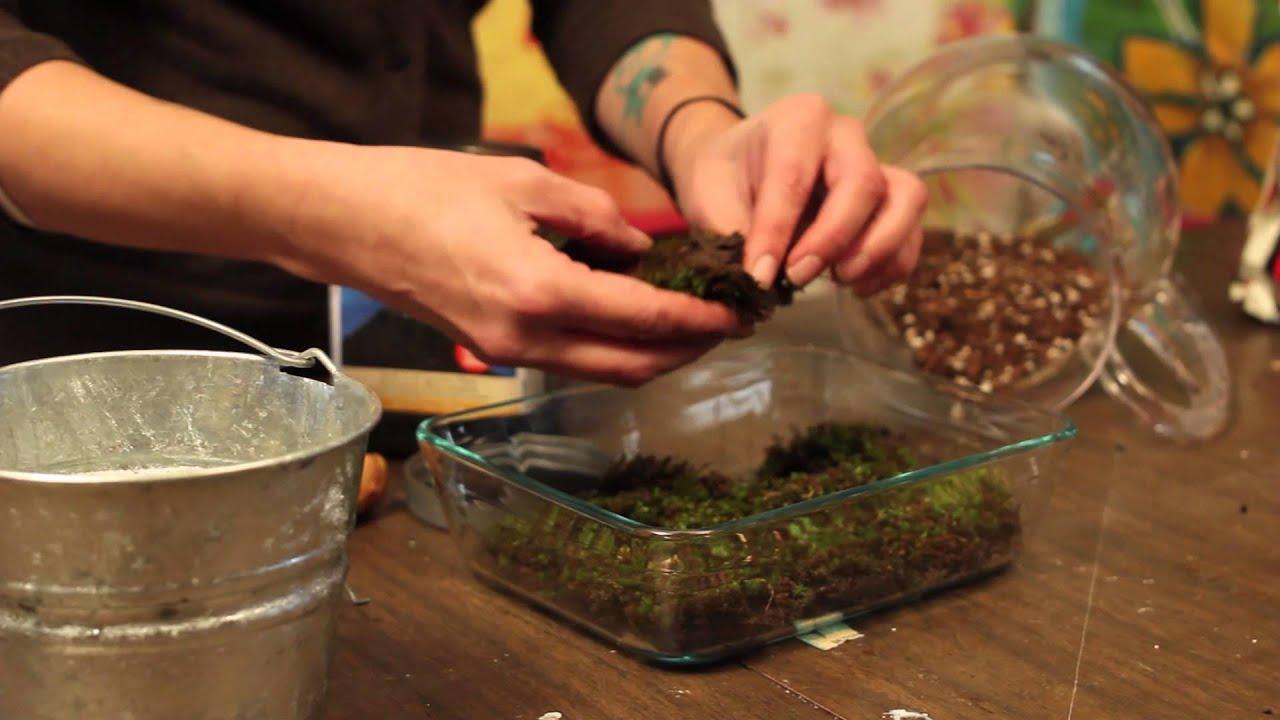 Creative Moss Terrarium | At Home With P. Allen Smith - YouTube