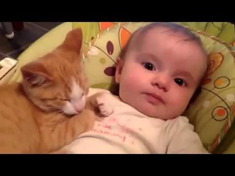 Nuovo Video Divertenti di Cani e Gatti di Compilazione 2015, Animali Divertenti parte 36