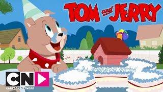 Tom & Jerry Show I Doğum Günü I Cartoon Network Türkiye