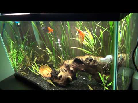29 Gallon planted tank (4.25.14) Where is the restart button?