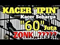 Mewahnya Kacer  Ipin  Milik H Agung Ngunut Yang Di Take Over Mr X Bandung juta Kok Zonk Ya  Mp3 - Mp4 Download