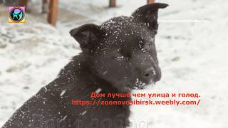 Самая грустная в мире собака обрела дом и шанс на спасение
