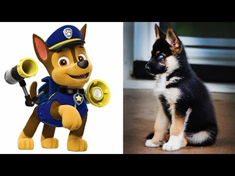 Paw Patrol Pups Characters In Real Life - Chase Marshall Skye Rocky Rubble Zuma Everest Tracker