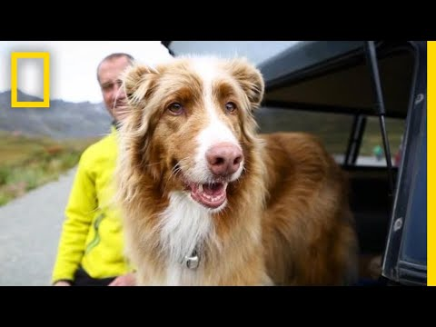 See How This Avalanche Rescue Dog Is Enjoying Her Retirement | Short Film Showcase