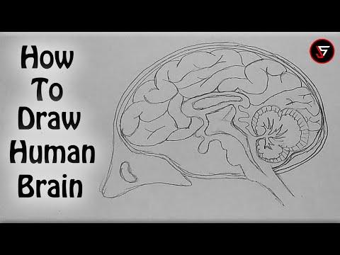 How to Draw Human Brain | 2019