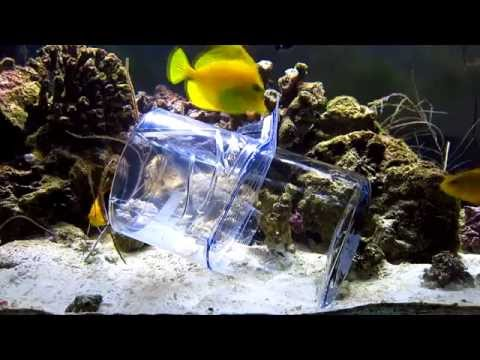 DIY Reef Aquarium Fish Trap