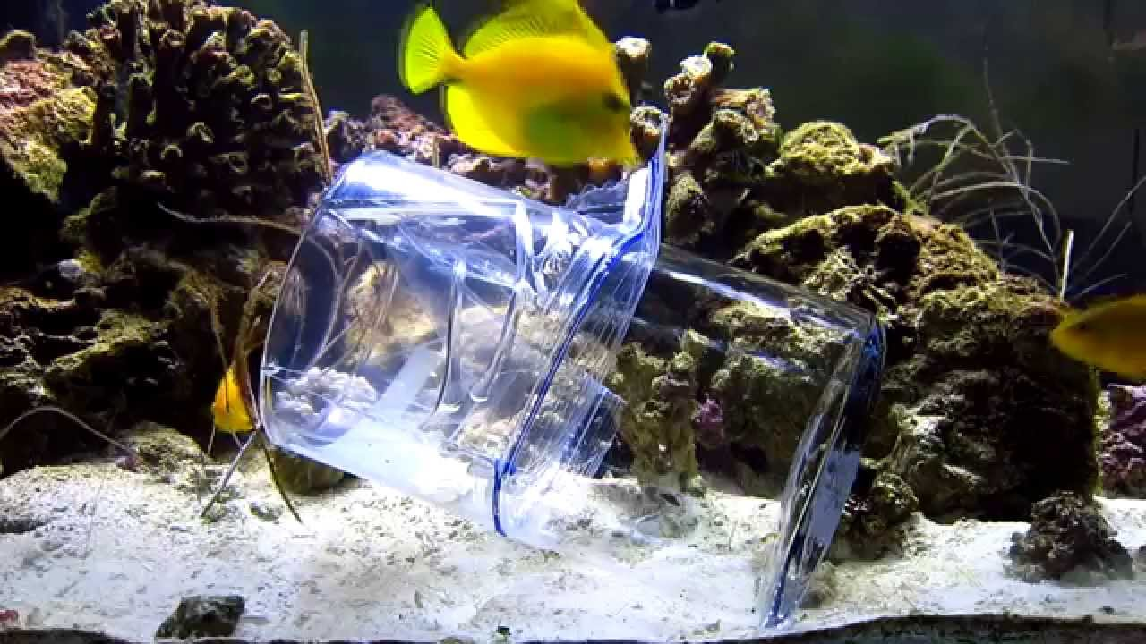 Diy reef aquarium fish trap youtube for Aquarium fish trap
