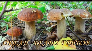 Много белых грибов. Часть 2. 18.07.2018