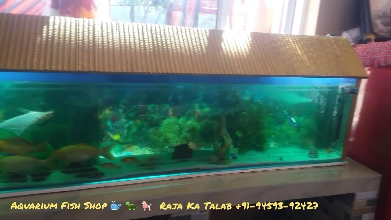 Fish aquarium in rawalpindi - Aquarium Fish Shop Raja Ka Talab Himachal Pradesh 176051