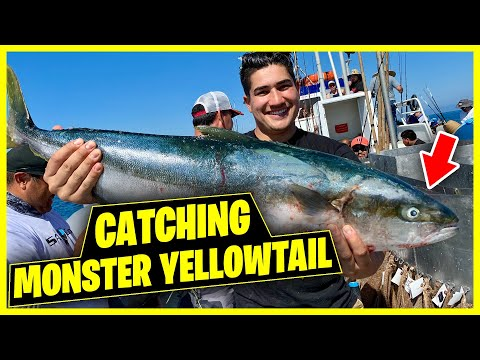 Fishing For Monster YellowTail On The