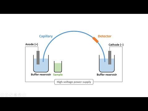 Capillary Electrophoresis (Part 2): Instrumentation & Electroosmotic Flow