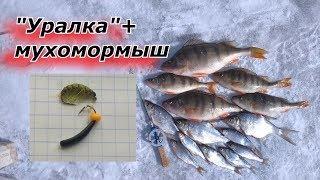 Весенняя ловля на Уралку и мухомормыш.