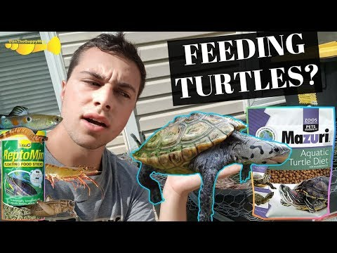The ULTIMATE Turtle Food Guide | Turtle Basics
