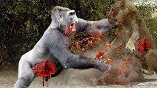 гри мавпи