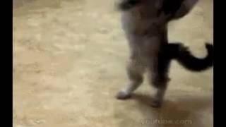 Коты дьяволы