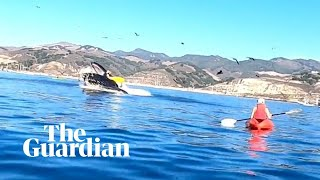 Kayakers nearly swallowed by humpback whale in California