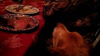 George Begs For Christmas Dinner thumbnail
