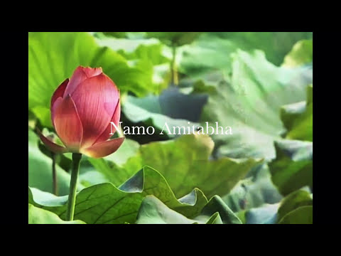 NhạcThiền - Meditation Music - HD Video (Lotus Garden)