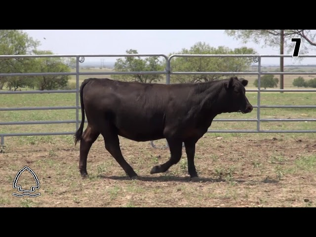 Pearcy Angus Ranch Lot 7