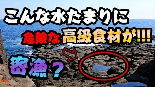【密漁?】海にある水たまりの中に危険だけど高級なアイツがいた!!!【流血】