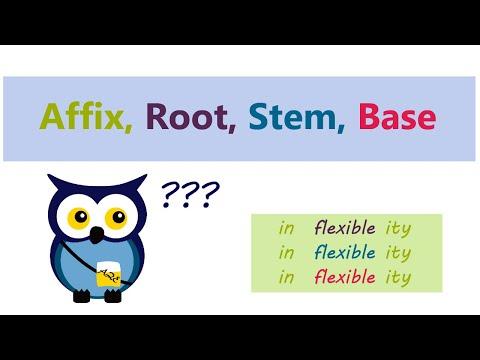 Affix, Root, Stem, Base