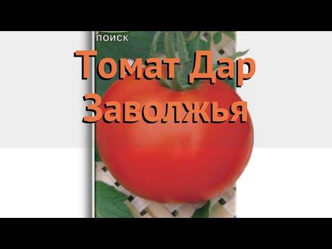 Томат обыкновенный Дар Заволжья (dar zavolzhya) 🌿 обзор: как сажать, семена томата Дар Заволжья
