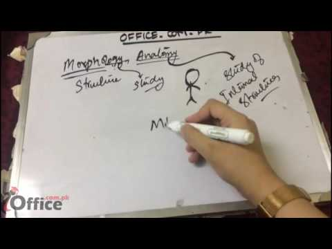 Morphology and anatomy