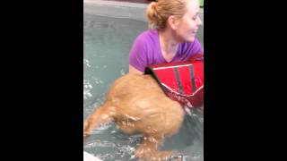 Mango's 1st Swim At Canine Water Wellness