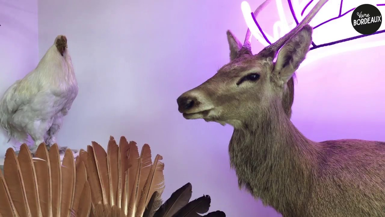 taxidermiste 18