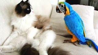 Śmieszne Koty Denerwujące Papugi