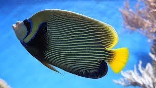Аквариум купить - Тверь, аквариум купить, аквариумные рыбки, корма