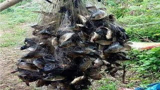 Amazing Fishing Trap in Cambodia-Traditional best Fishing Videos by hands-amazing net fishings-fish
